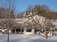4000 cherry trees in snow