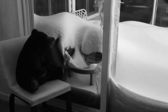 regen teddy bear