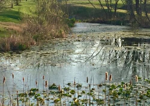 fall-pond