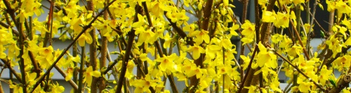 spring4