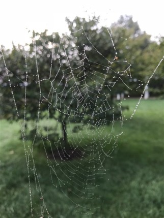 Joyce-Spider web 1000s